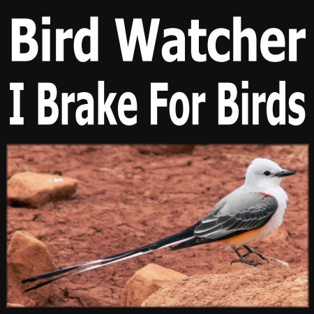 """4"""" x 4"""" Scissor-tailed Flycatcher Full Color Sticker. Not shown actual size."""